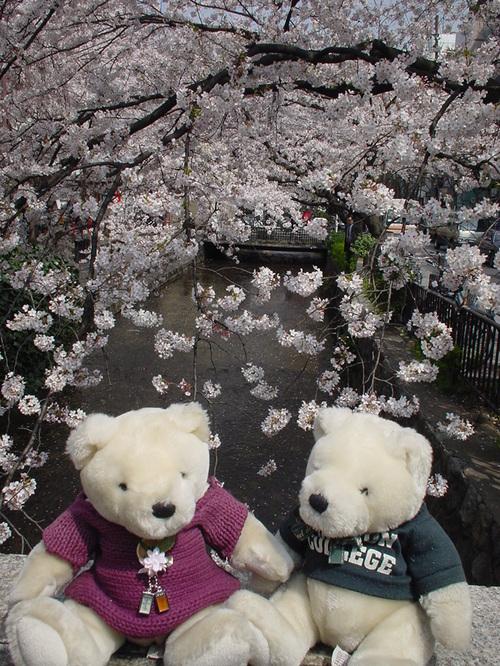 春の京都で